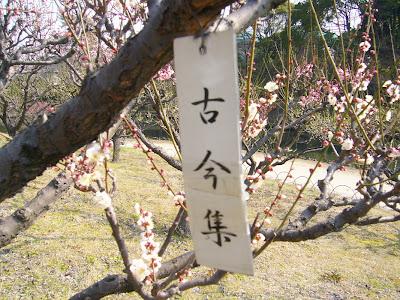 兵庫県・伊丹市 緑ヶ丘公園の梅 古今集