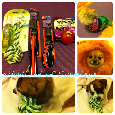 Dogs, halloween costumes, dental hygiene, dental care, safety