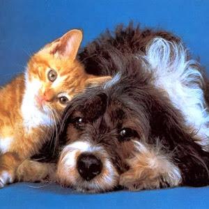El vomito de los Gatos y Perros