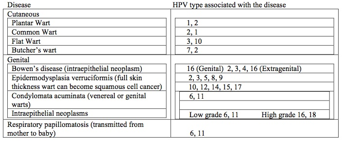 hpv genital warts types