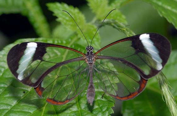Метелики фото 4