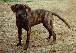 CAIERE CHASE: Atlas of Hunting Dog Breeds of the world ...