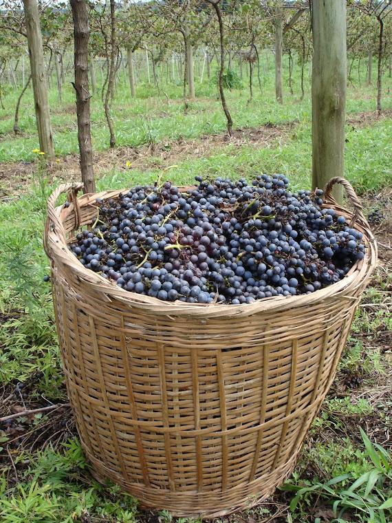 Vinho Caseiro (I)