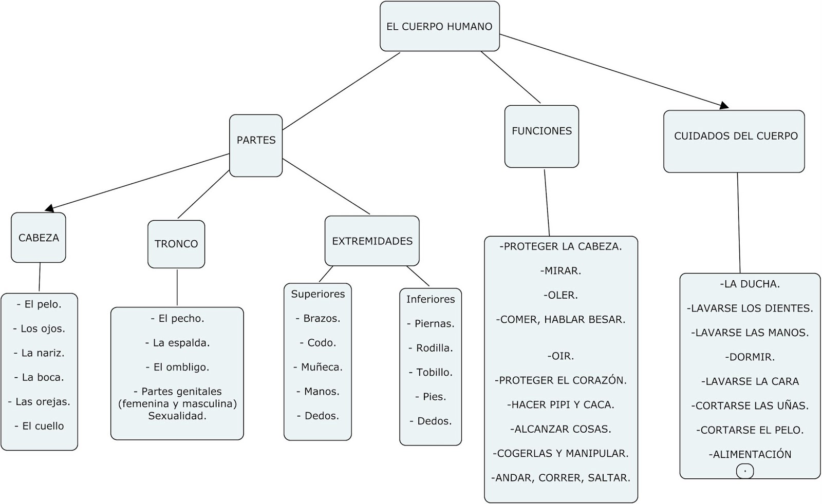 Asombroso Mapa De Los órganos Del Cuerpo Humano Viñeta - Imágenes de ...