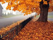 Hermoso árbol en la bella época de otoño. Fotografía de un bello árbol lleno . hermoso ã¡rbol en la bella ã©poca de otoã±o
