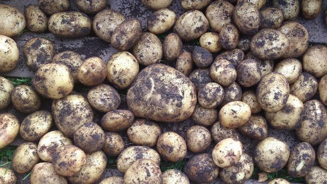 Potatoes Baggböle