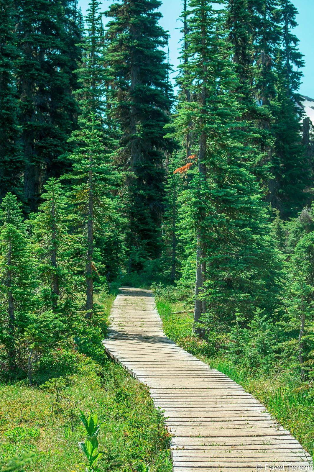 Идём дальше по дощатым дорожкам кэмпграунда в глубь альпийских лугов Тэйлора.