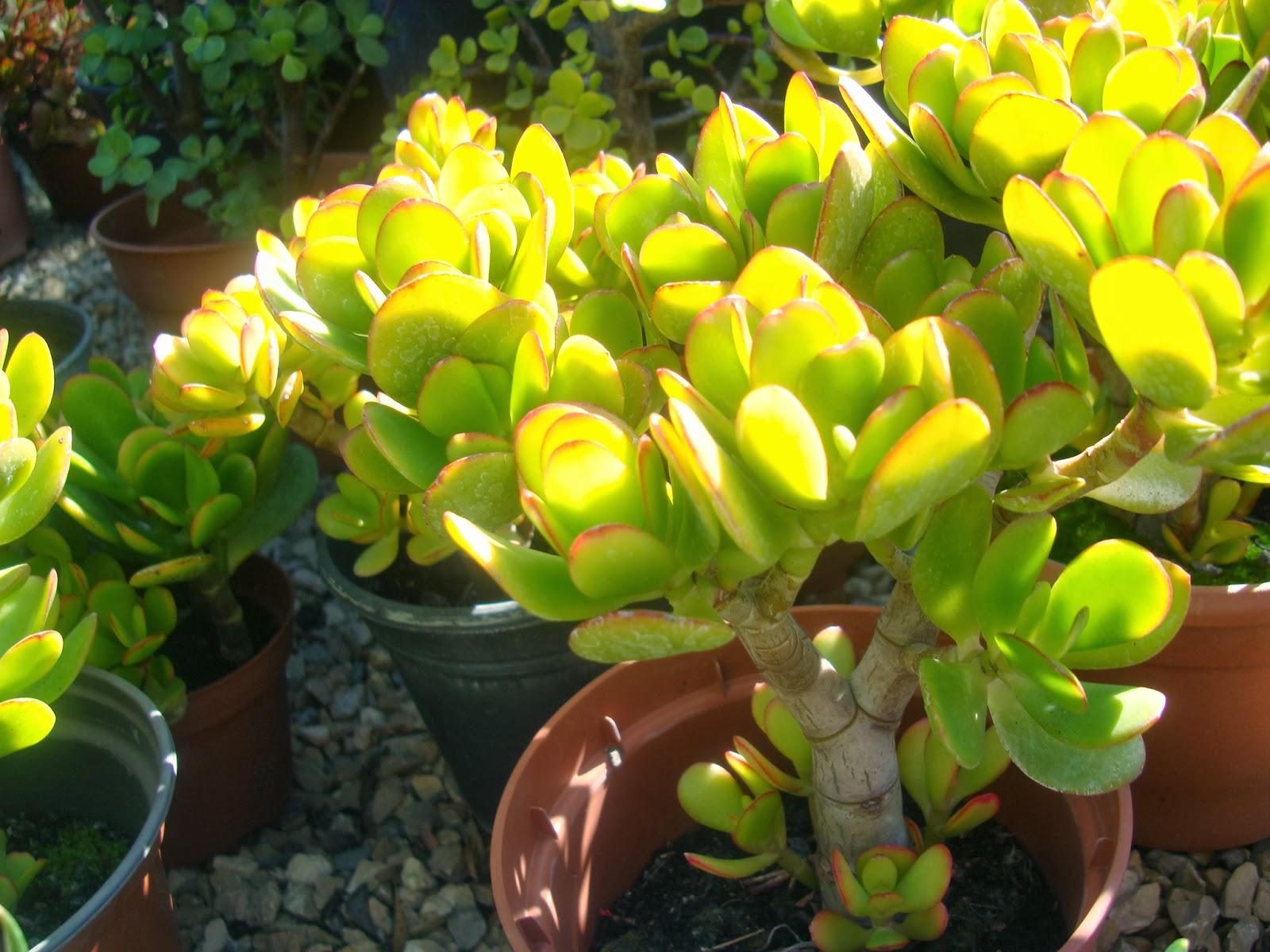 Plantas aromaticas ornamentais e ex ticas pre rio de - Plantas aromaticas exterior ...