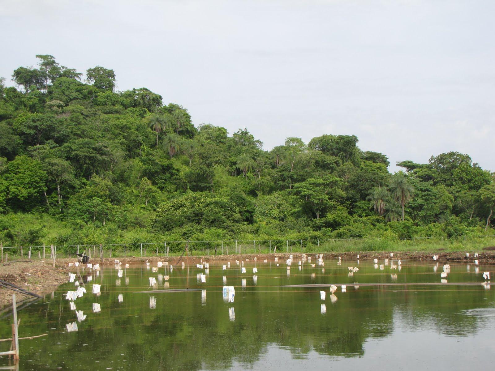 Llano extremo la creatividad aplicada a la piscicultura for Lagunas para cachamas