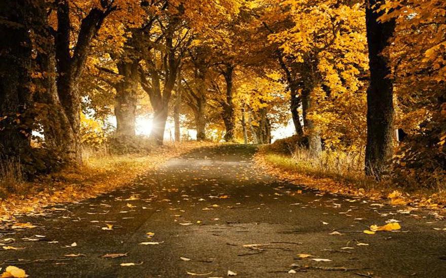 تحكي جمال وروعة الخريف autumn7.jpg