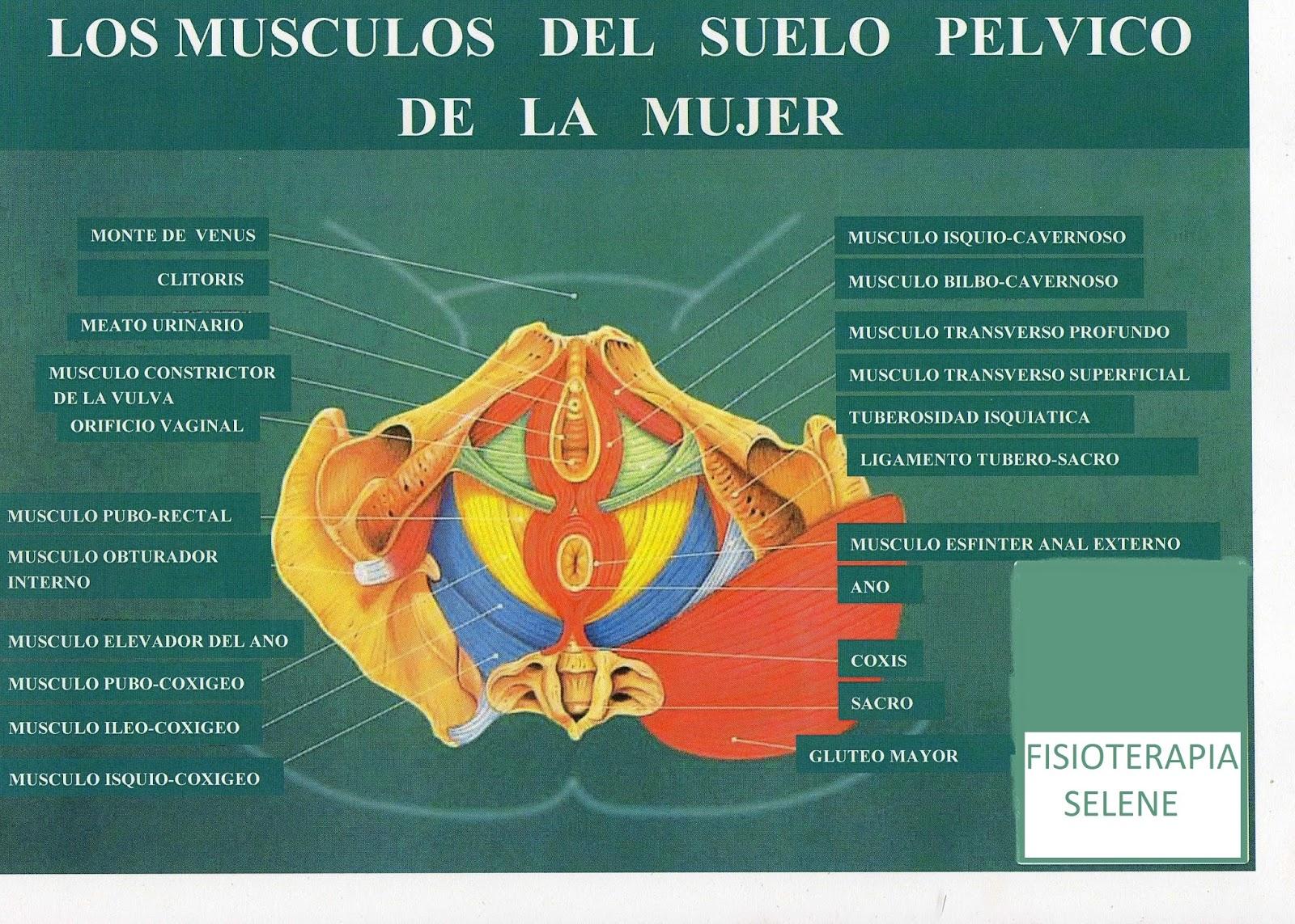 Fisioterapia Selene: 2015