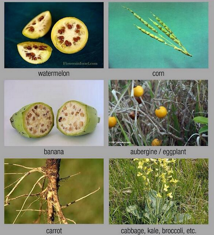 a comparison of genetic engineering in Genetic engineering is an area of molecular biology that involves manipulating  the structure of genetic material also known as.