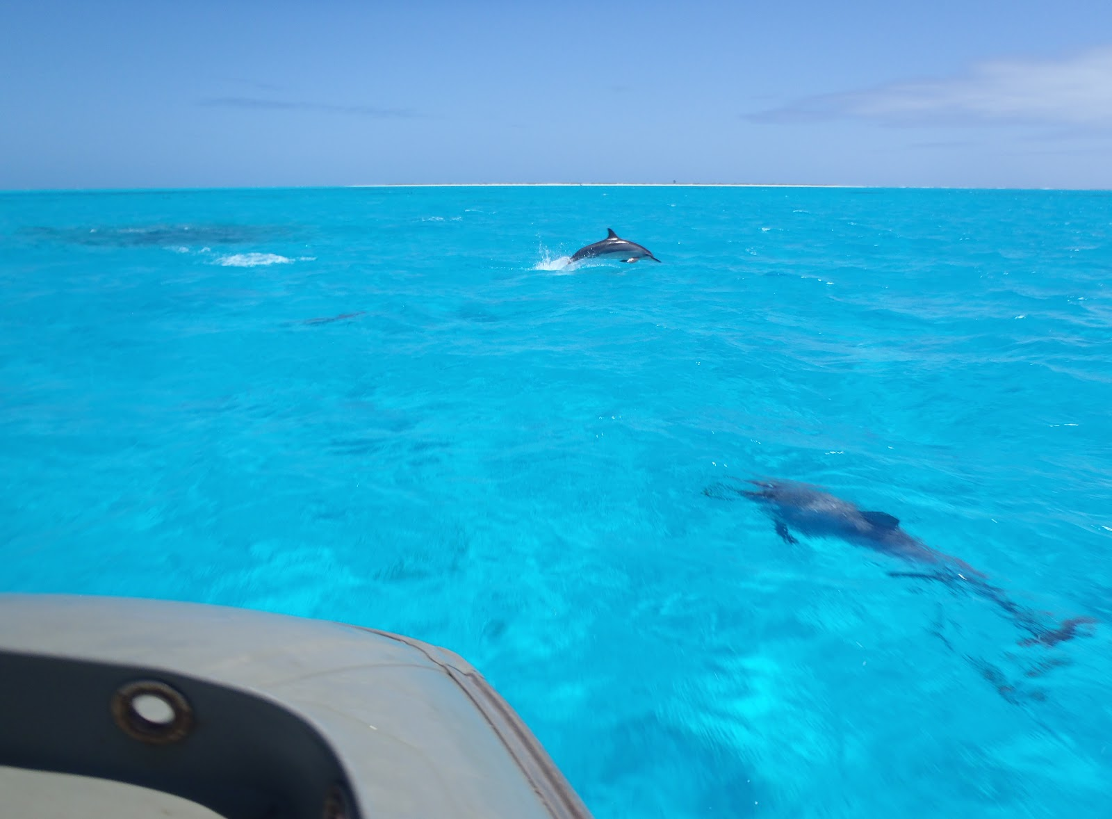 The dolphins came to escort us to the island
