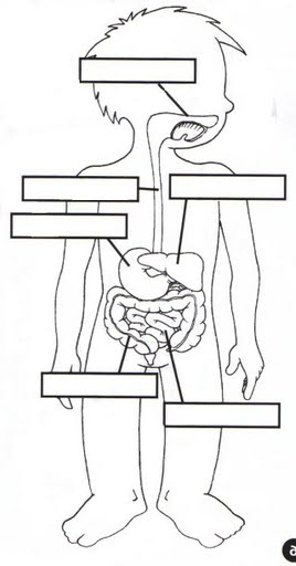 The Human Body: Worksheets - Mamas Learning Corner