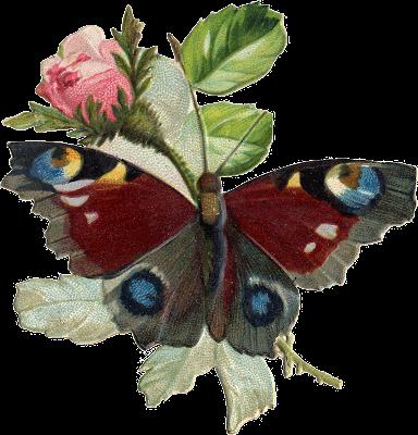 http://1.bp.blogspot.com/-WaEdZD5VhRg/Un4KuBCaH0I/AAAAAAAAdPs/bwwel-FCmVM/s320/ie154_butterfly1cob.png