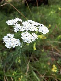 The Great Plant Hunt Estonia