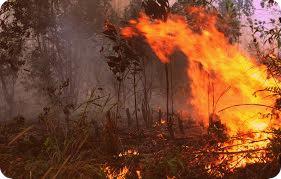 Titik Api di Merauke Berkurang Karena Turun Hujan dan Dipadamkan Satgas