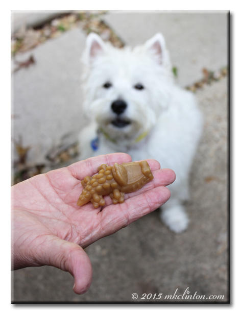 Whimzees Gator-shaped dog chew and Pierre Westie