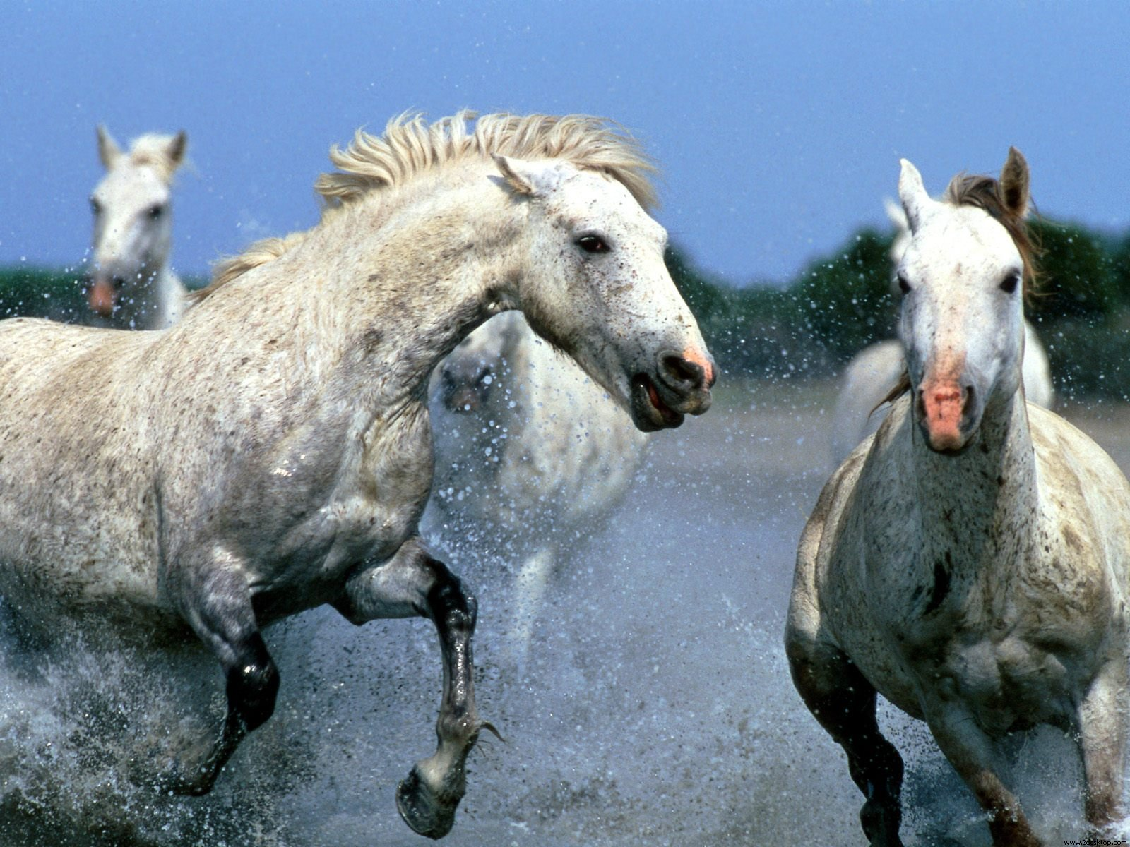 wild horses racing wallpaper - photo #37