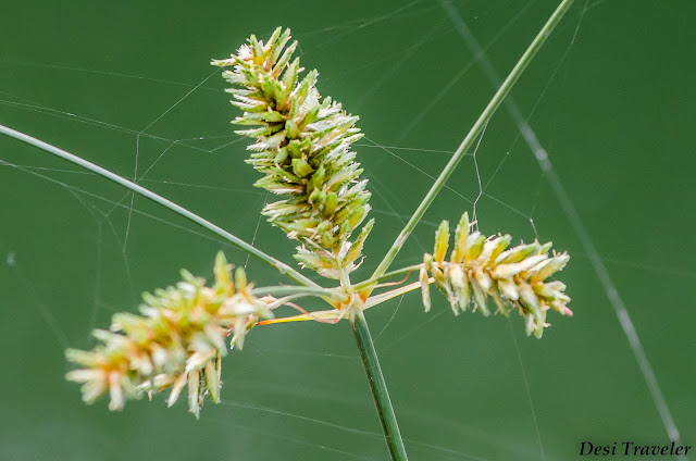 grass flowers with spider web thread macro photography