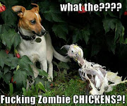 Funny Dog vs Chicken Zombie