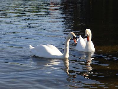 Mazury, żeglowanie, Czaple,stanica wodna, Krzyże, plaża, Jezioro Nidzkie, rezerwat przyrody Jezioro Nidzkie