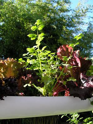 C mo dise ar un jard n colgante para este 2012 - Disenar jardin online ...