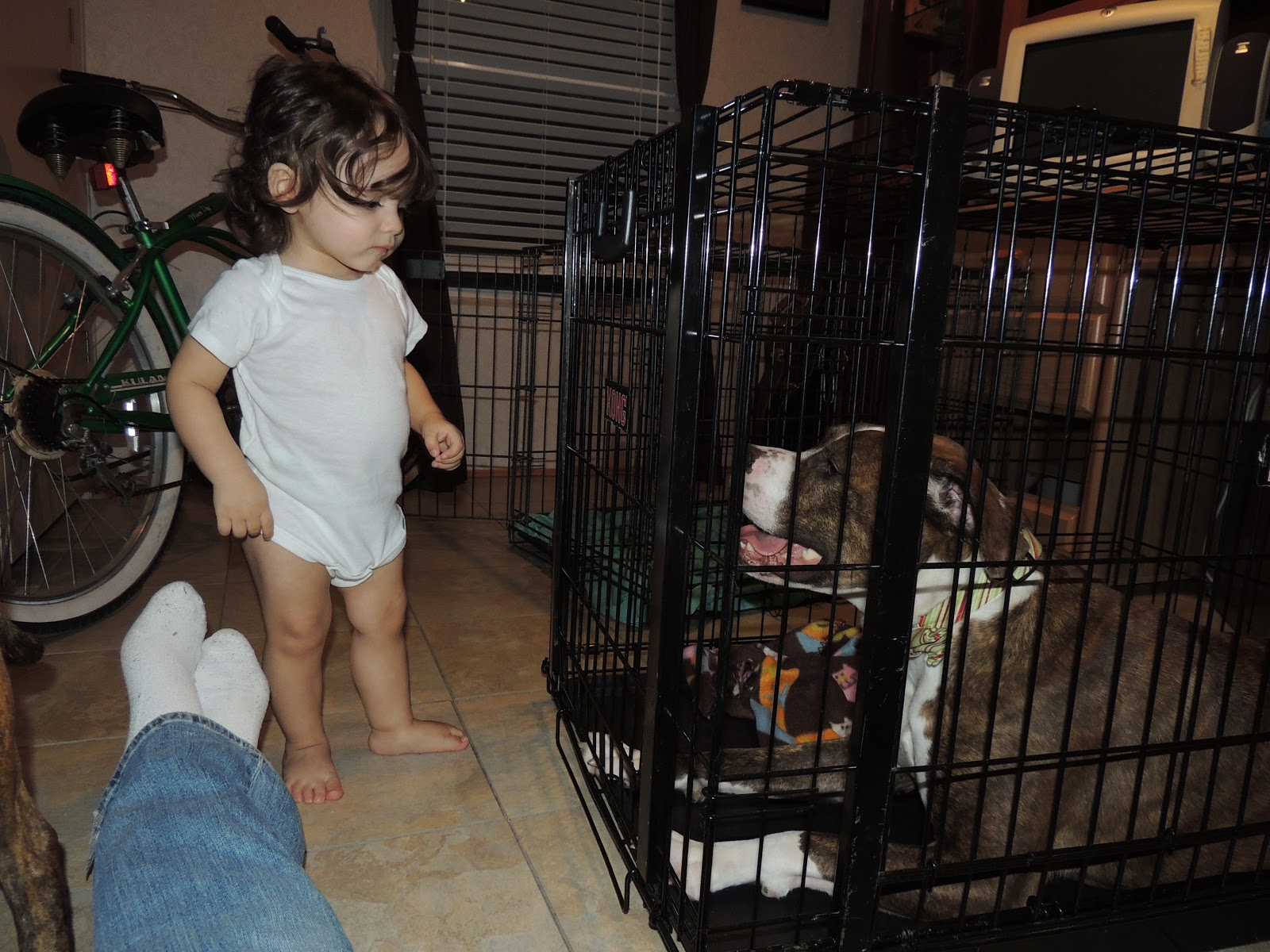 Crate Trained Dog Started Whining