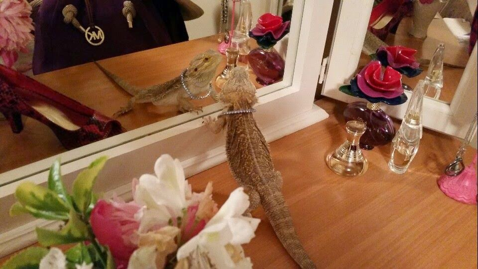 Funny animals of the week - 13 June 2014 (40 pics), animal pictures, photos of animals