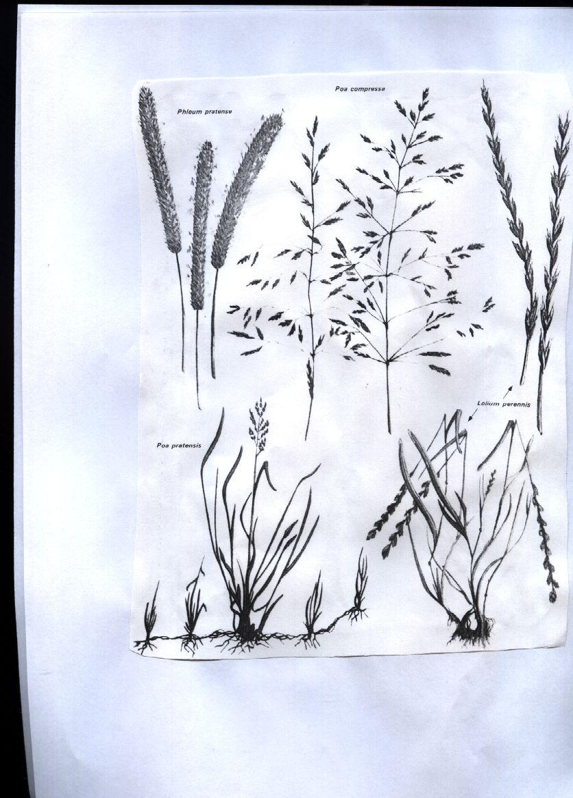 Formaci n en jardiner a dise o y proyecto con c spedes - Semillas de gramon ...
