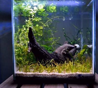 Paisajismo acuático japonés