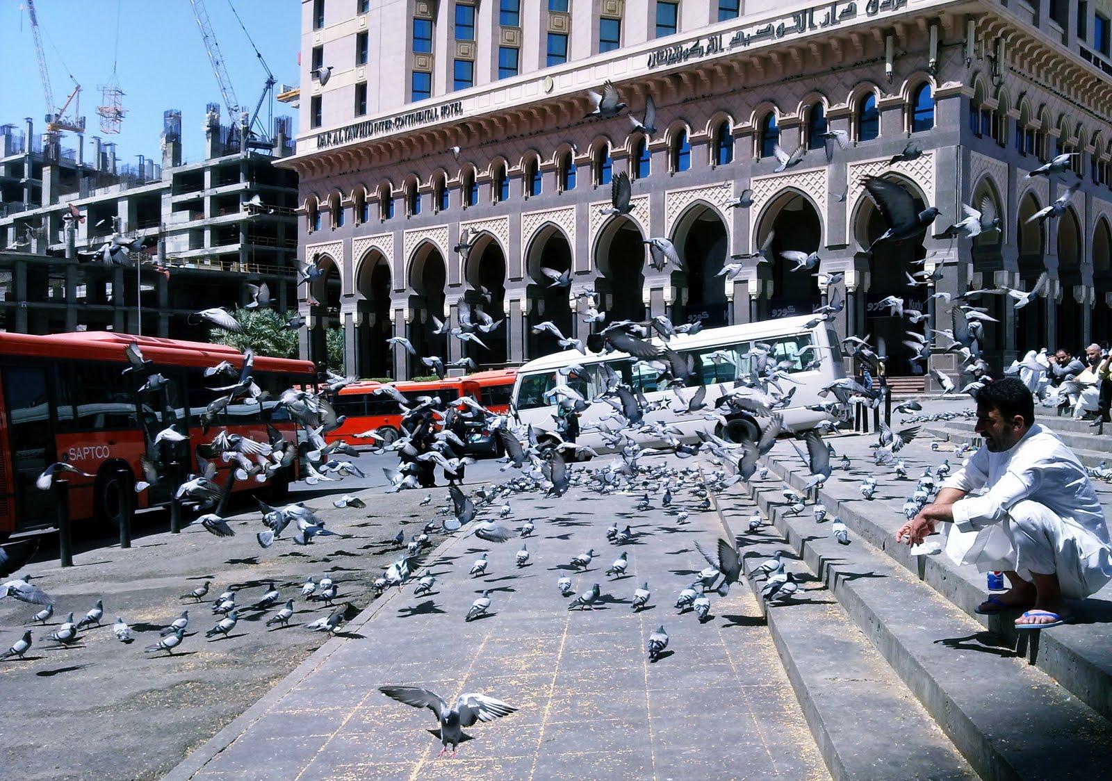 Dunia Islam Mitos Burung Merpati Di Mekkah