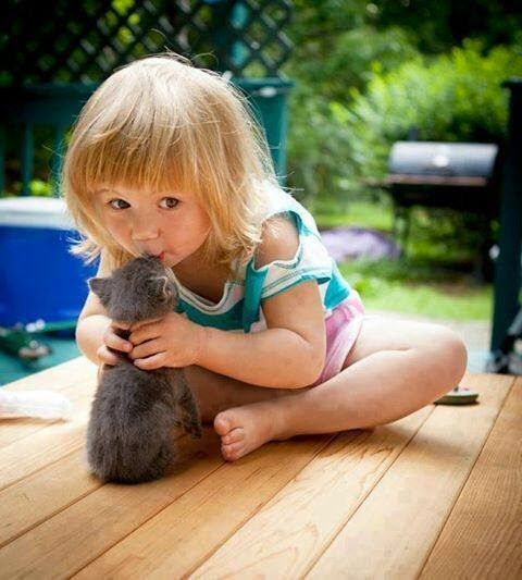 Cat with baby
