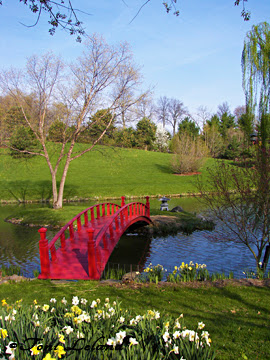 Red Bridge over water in Japanese Garden by Toni Leland