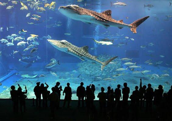 city aquarium