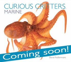 curious critters marine cover