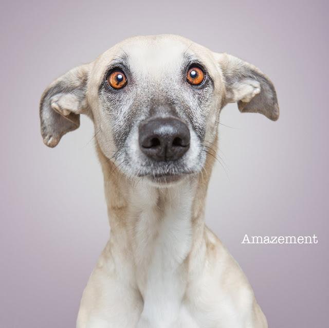 Elke Vogelsang, Dogsonality, fotografía, photography, dogs, perros, amazement, asombro