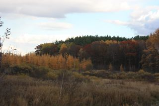 photo of autumn foliage of pines, oaks, tamaracks, meadow