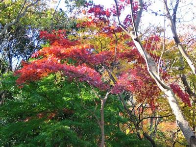 浄明寺緑地の紅葉・黄葉