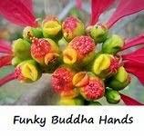 Funky Buddha Hands
