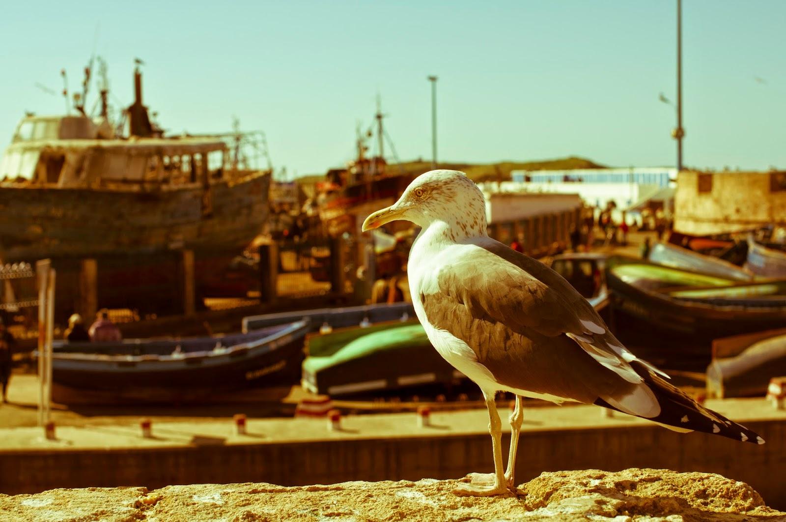 Şirin Bir Sahil Kasabası aka Essaouira