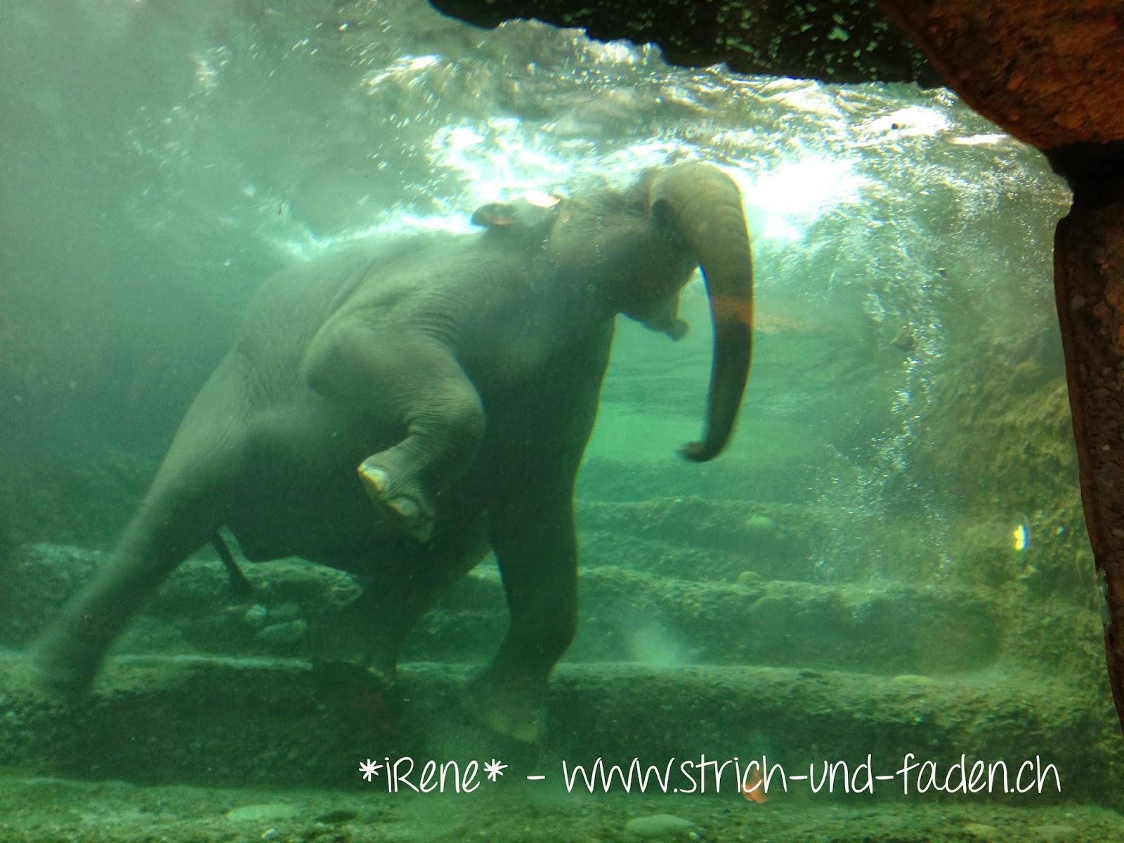 mit Strich und Faden | Elefanten Schwimmen Zoo Zürich