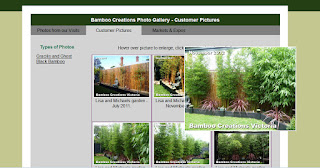 Bamboo Creations Victoria photo gallery
