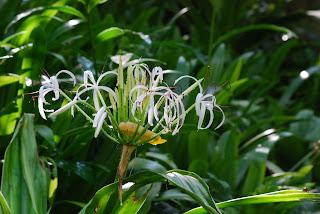 Tropical Spice Gardens Penang