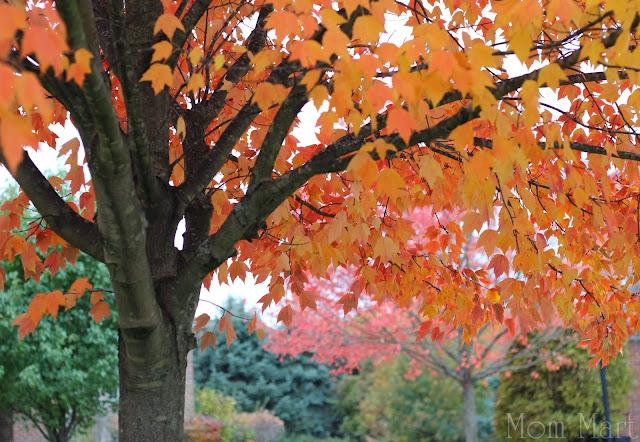 Autumn in Illinois Fall Orange Leaves