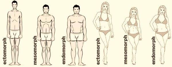 Body Type-Body Type-Body Type