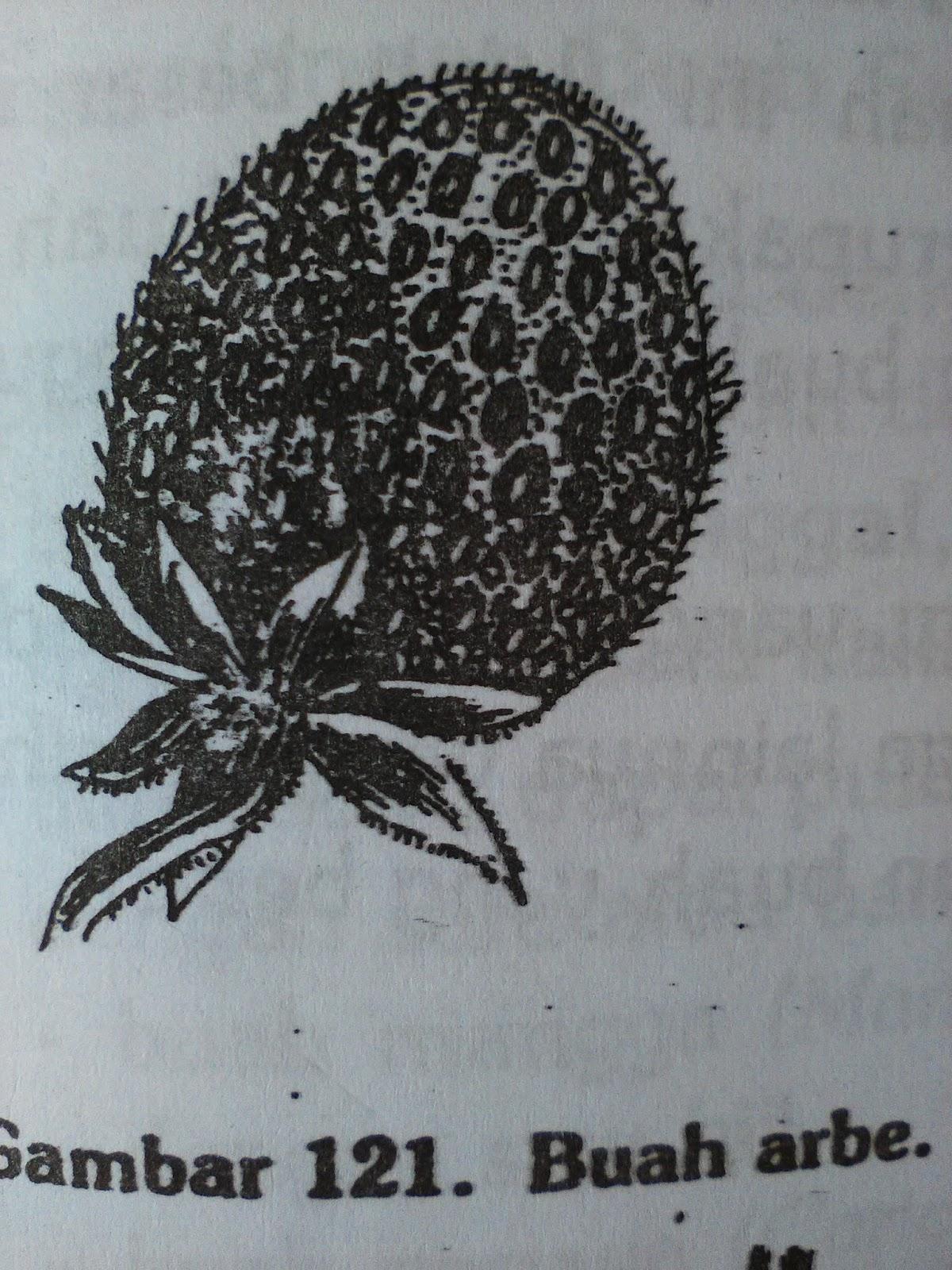 Bagian bagian bunga buah semu majemuk ialah buah semu yang terjadi dari bunga majemuk tetapi seluruhnya dari luar tampak seperti satu buah saja misalnya buah nangka ccuart Image collections