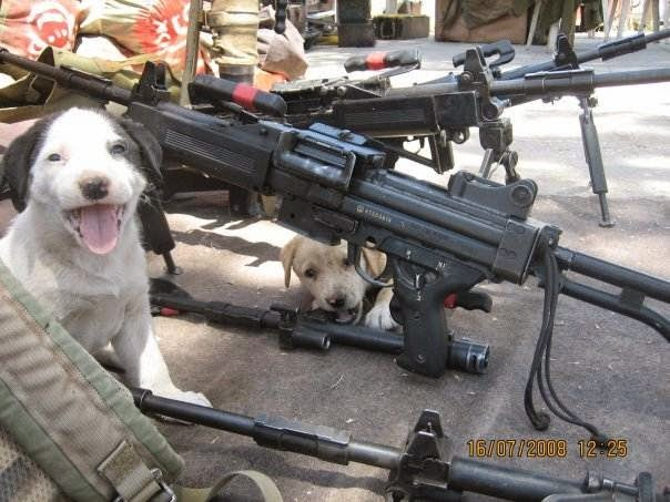 Top 12 Funny Cats and Dogs with Guns | Funny Collection World