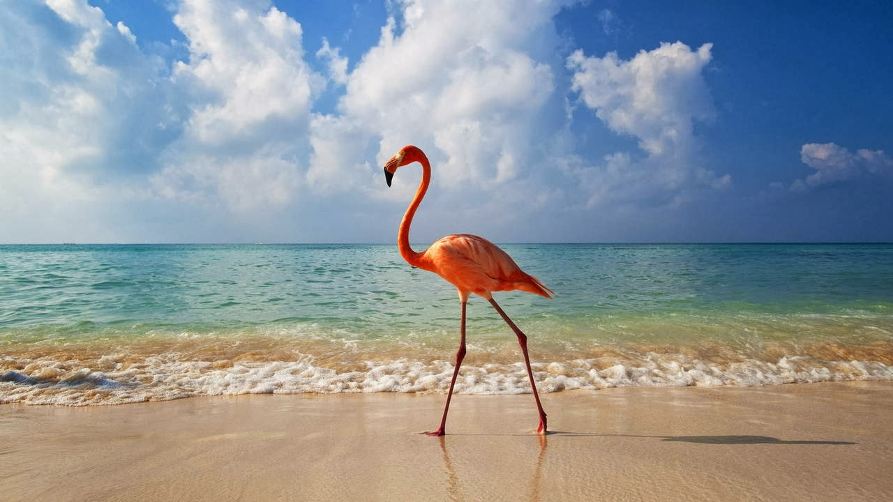 Funny animals of the week - 7 February 2014 (40 pics), flamingo on the beach