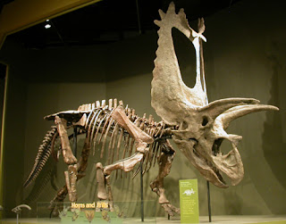 Esqueleto Pentaceratops